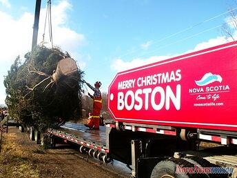 Boston_Tree_1