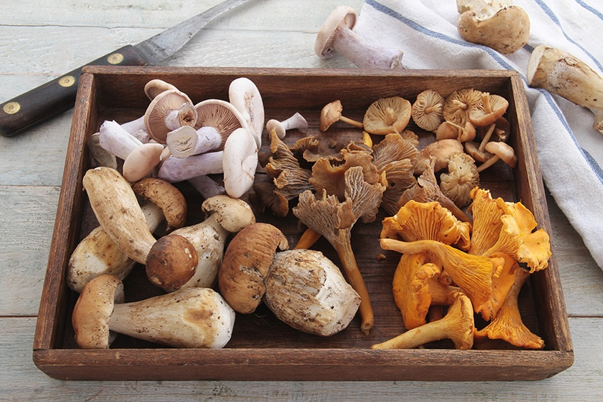 Educatours-Action-de-Grace-Champignons